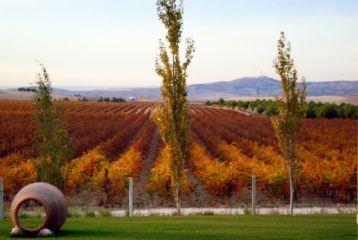 Bodegas y Viñedos Casa del Valle - Viñedo en otoño