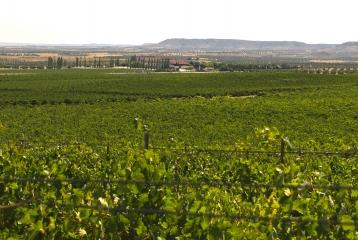 Bodegas y Viñedos Casa del Valle - Visual desde la parcela