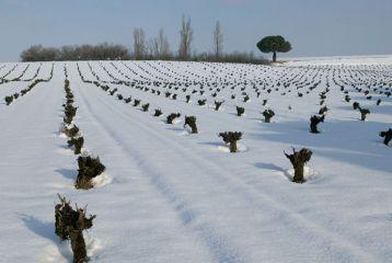 deAlberto - Invierno en los viñedos