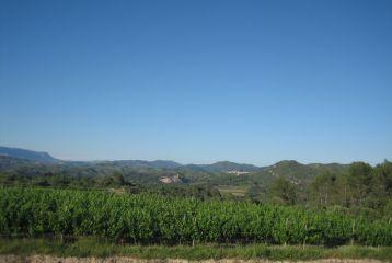 Celler Domini de la Cartoixa - Otra excepcional vista desde la bodega.