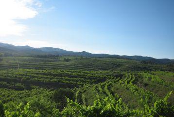 Celler Domini de la Cartoixa - Impresionantes vistas desde la bodega.