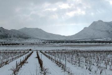 Bodegas Silvano García - Viñedos en invierno