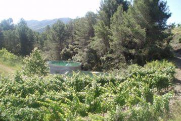 Llicorella Vins - Arboleda de la Finca Mas Saura.