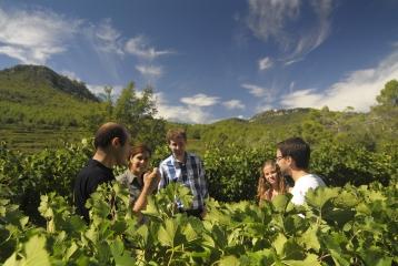 Bodegas Parés Baltà - Visita a viñedo