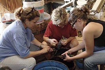 Centro de Interpretación del Vino y la Tonelería Artesana - Curso de viticultura. Seleccionando la uva