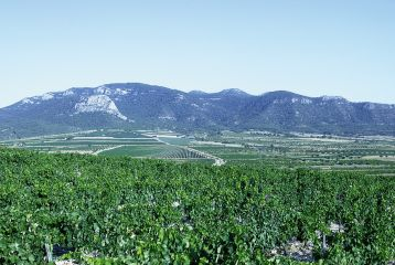 Bodegas Hacienda del Carche - Valle y Sierra del Carche, Paraje Natural Protegido