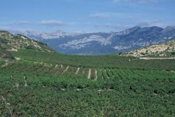 Bodegas Palacio - Viñas