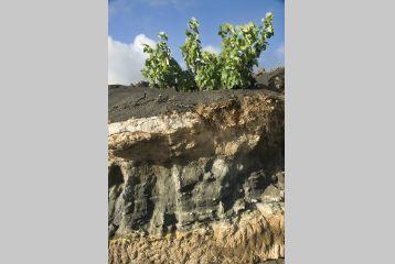Bodega Stratvs - Estratos Viñas