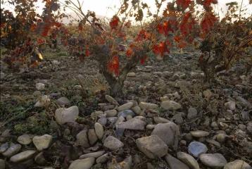 Finca Valpiedra - Detalle piedras viñas