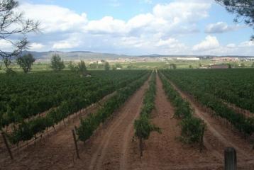 Bodegas y Viñedos Vegalfaro - Finca Alfaro