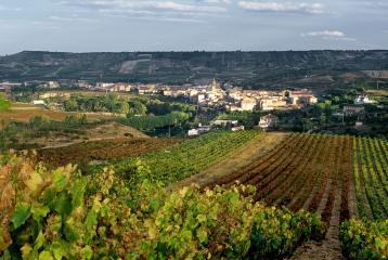 Bodegas Riojanas - Vista de Cenicero