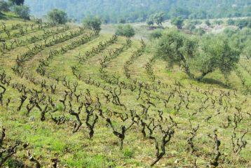 Bodega Dosterras - Viñas