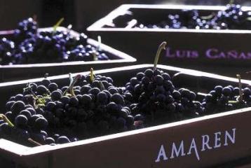 Bodegas Amaren - La uva