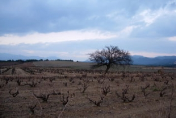 Bodega Mas Llunes - Viñas