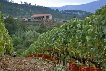 Casal de Armán - Nuestros viñedos