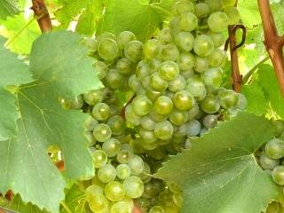 Chardonnay de Bodegas Urabain