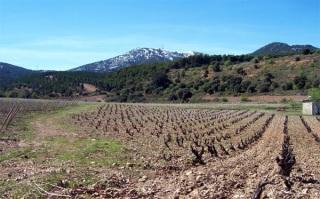 Otro de los viñedos de Quinta Mazuela