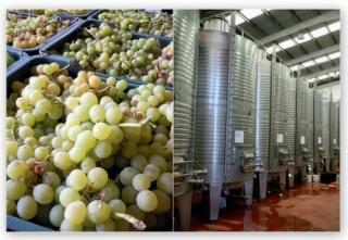uva y depósitos