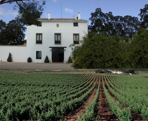 Hoya de Cadenas: Casa Solariega rodeada de viñedos