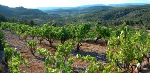Viñas de Vinyes Domenech