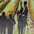 Walk&#038;Wine: una nueva experiencia enoturstica