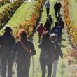 Walk&Wine: una nueva experiencia enoturística