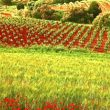 Visitas a bodegas en «la Toscana valenciana»