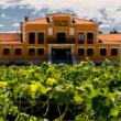 Visita las bodegas Pradorey en plena vendimia