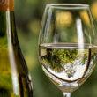 Guía fácil de cata de vinos para el confinamiento