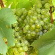 Vinos de Bodegas Urabain en nuestra cata de Vinos de Navarra