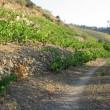 Origen y calidad de los vinos