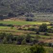 Explorando la comarca vinícola de Valencia
