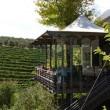 La Ruta del Vino en Cape Winelands, Sudáfrica