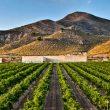 Bodegas Hacienda del Carche celebra su 10º Aniversario